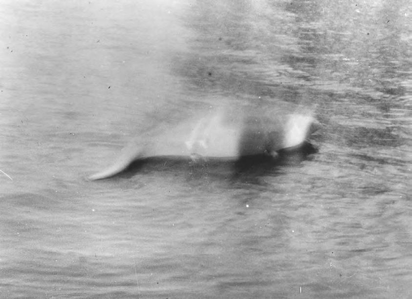 Nessie - pierwsze zdjęcie (1931)