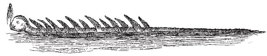 Wielka Morska Stonoga - ilustracja na podst. relacji załogi Princess