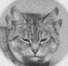 Kot czterouchy