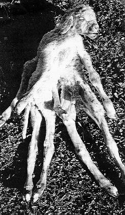 Baranek - ośmionogi