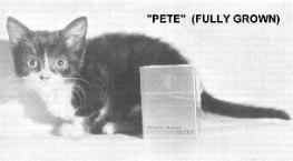 Kot (karłowatość, dorosły)
