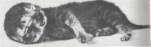 Kot o dwóch twarzach