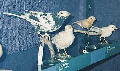 Kosy i rudziki