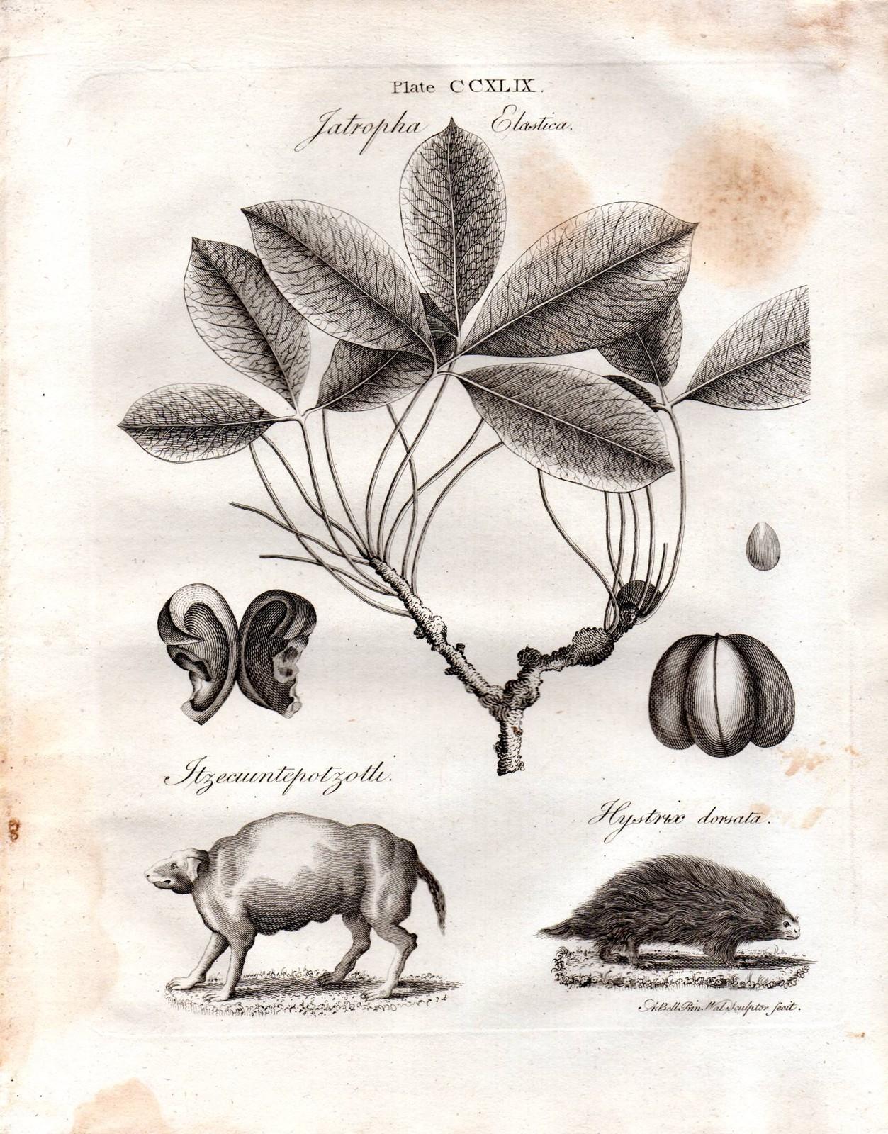 Itzcuintlipotzotli w Encyklopedii Britannica