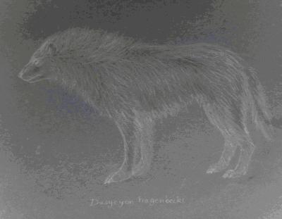 Wilk andyjski