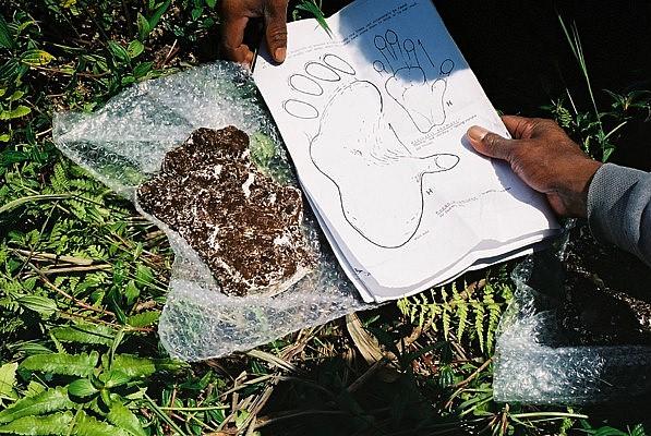 Orang Pendek - ślad z 2001 roku