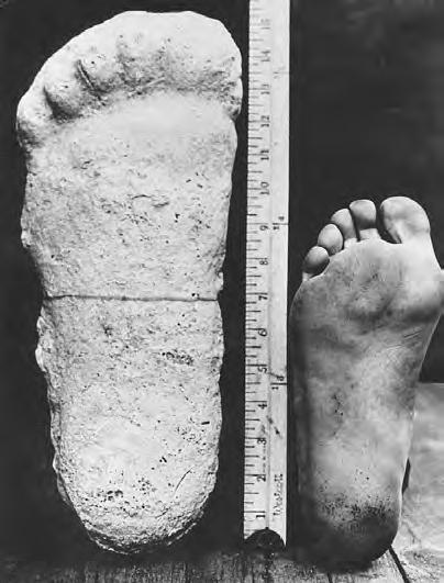 Yeti - porównanie odlewu stopy wykonanego przez Pattersona ze stopą człowieka