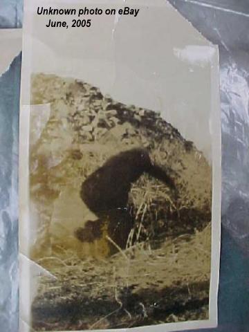 Bigfoot -fotografia nieznanego pochodzenia znaleziona na aukcji eBay