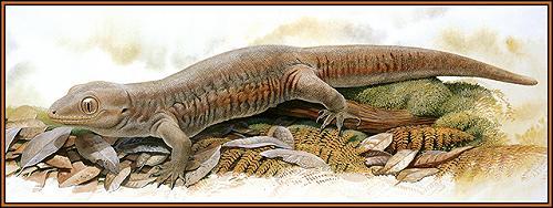 Kawekaweau (Hoplodactylus delcourti)