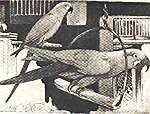 Ara turkusowa