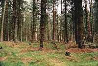 Rezerwat w Cannock Chase