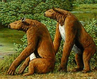Niedźwiedź z Nandi, Nandi Bear
