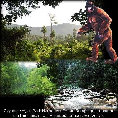 Park Narodowy Endau-Rompin w Malezji