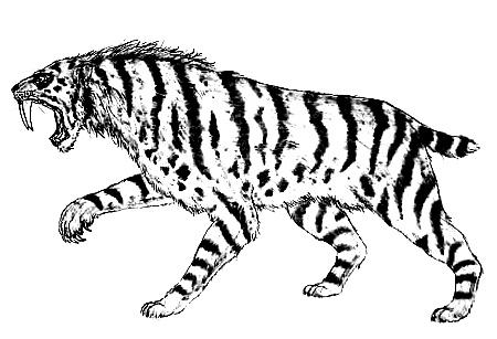 Tigre de montagne