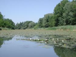 Torfowiska i trzcinowiska na Węgrzech